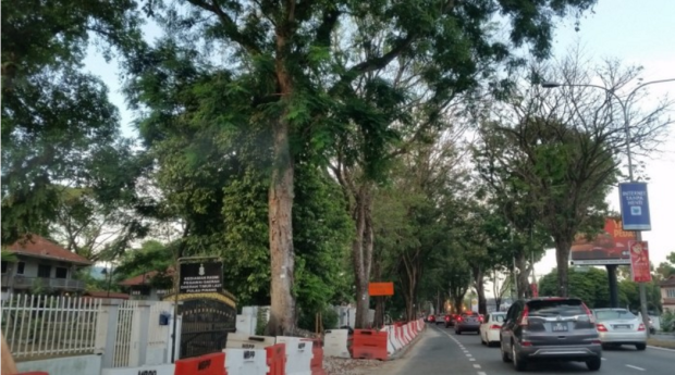 penang-road-widening-save-sacrifices-trees